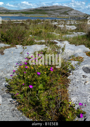 Gealain Lough and Mullagh More Claire The Burren Ireland - Stock Photo
