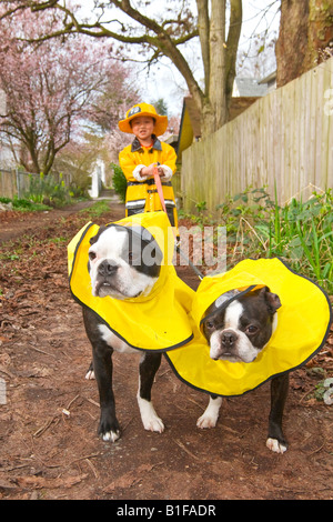 Asian boy walking dogs in raincoats - Stock Photo