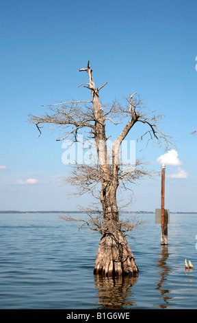 Florida wetlands showing a dead cypress tree in the middle of the lake - Stock Photo