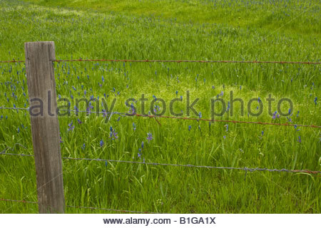 Rusted barbed wire fence on the edge of a meadow with wildflowers. Clarkia, Idaho, USA - Stock Photo