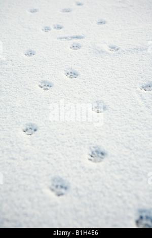 Animal tracks in the snow - Stock Photo