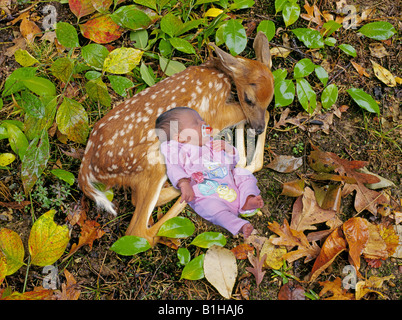 Portrait of a newborn fawn and a newborn baby in a forest asleep - Stock Photo