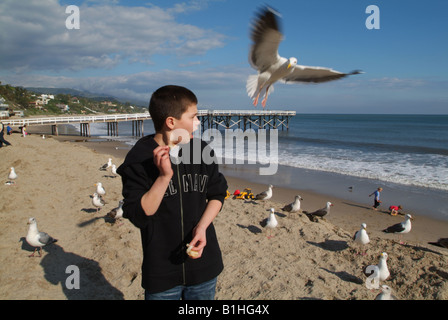 Young boy being surprised by a seagull that is trying to eat food that the boy is holding - Stock Photo