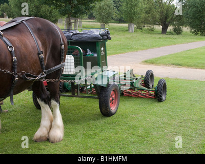 A lawn mower implement being pulled behind a pair of Shire horses in Richmond Park, Richmond. Surrey. UK - Stock Photo
