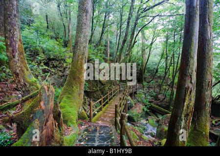 Footbridge in a forest, Yakusugi Forest, Yakushima Island, Kagoshima Prefecture, Japan - Stock Photo