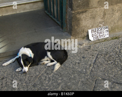 A notice beside a sleeping dog on a street in Sorrento, near Naples, Italy, asking tourists not to pester him - Stock Photo