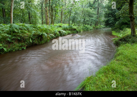 Blackwater river in the New Forest after heavy rain. - Stock Photo