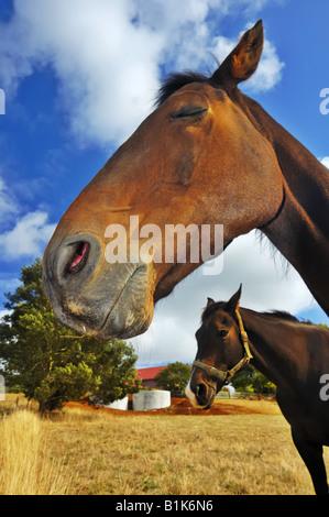Bored horse - Stock Photo