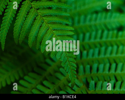 Close-up of fern leaves. - Stock Photo