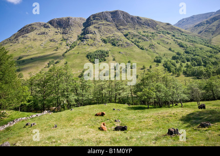 Western slope of Ben Nevis from Glen Nevis with the access path to the summit just visible half way up the slope. - Stock Photo