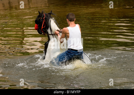 Washing horses in the River Eden at the ancient Appleby Horse Fair held each June - Stock Photo
