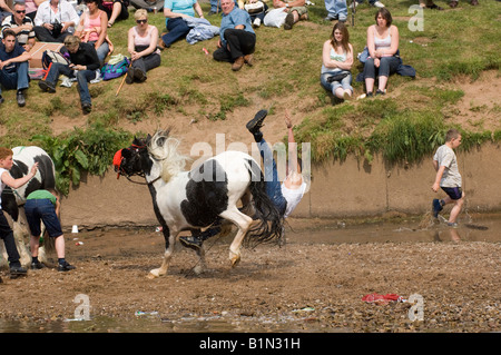 Gypsy rider at Appleby Horse Fair falls off back of piebald pony he was riding bareback in River Eden - Stock Photo