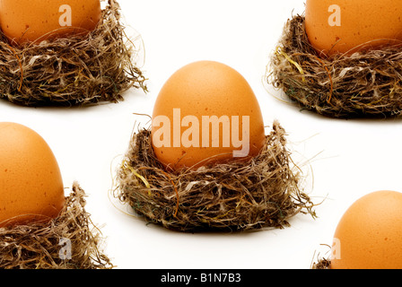 Five eggs in a nest, financial concept. - Stock Photo