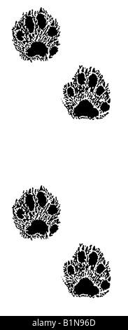 European Pine Marten (Martes martes), footprints, drawing - Stock Photo