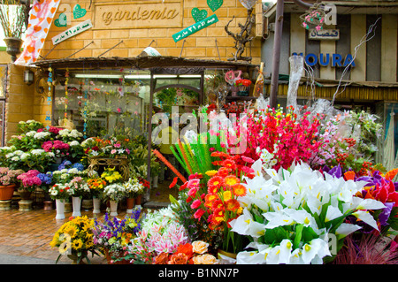 ... The Gardenia Flower Shop Displays Colorful Flowers Outdoors In The  Community Of Zamalek Cairo Egypt