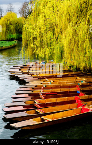 Punts tied up along the bank of the River Cam beneath a weeping willow tree at Cambridge, England, UK - Stock Photo