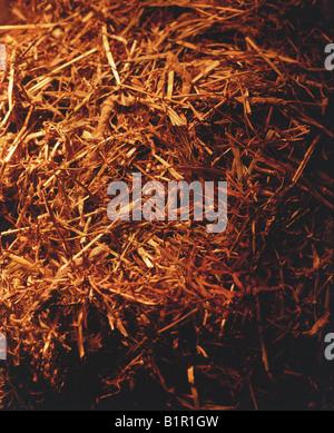 Needle in Haystack - Stock Photo