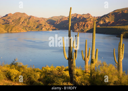 Wildflowers and Saguaro Cactus at Saguaro Lake in the Tonto National Forest near Fountain Hills outside of Phoenix - Stock Photo