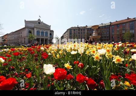 Flowering spring flower patch at Gaertnerplatz Square in front of Gaertnerplatz Theatre, Isarvorstadt, Munich, Bavaria, - Stock Photo