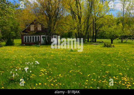 Abandoned country house in a field of wildflowers in spring Bruce Peninsula Ontario - Stock Photo