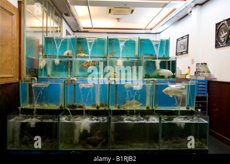 Restaurant offering fresh fish directly from their aquarium, Boat Quay, Singapore, Southeast Asia - Stock Photo