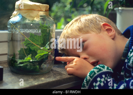 Boy looking at caterpillars in a glass jar - Stock Photo