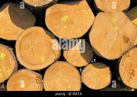 Partially tagged, stacked spruce trunks, logs, cross-section of desiccation cracks, Viechtach, Bayerischer Wald, - Stock Photo