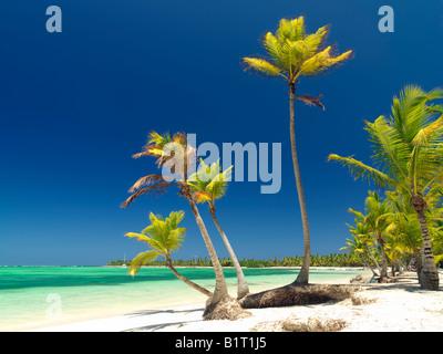 Dominican Republic Punta Cana Bavaro Beach palm trees on white sandy beach facing the sea - Stock Photo