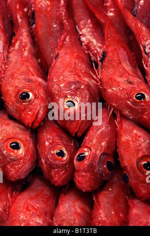 Tsukiji Fish Market Tokyo Japan - Stock Photo