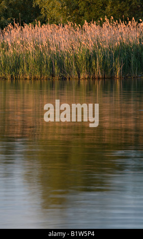 Grass on the Shore of Owen Sound, Ontario, Canada - Stock Photo