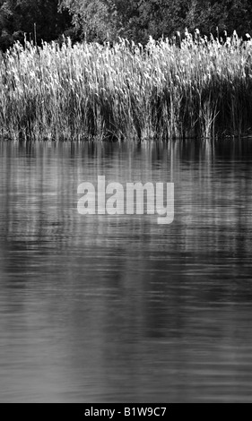 Grass on the Shore of Owen Sound, Ontario, Canada, Black and White - Stock Photo