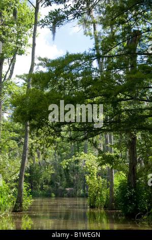 Honey Island Swamp, West Pearl River, Slidell, Saint Tammany Parish, Northshore, Louisiana. - Stock Photo