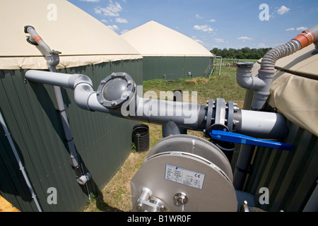 Cow Manure Is Collected to Extract Methane Gas to Produce Electricity on Dairy Farm - Stock Photo
