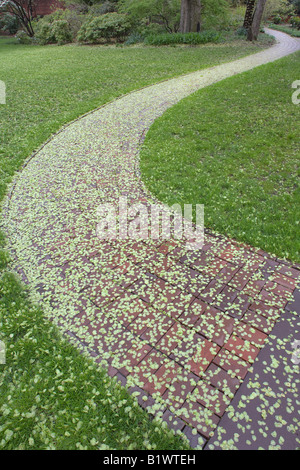 Elms Seeds and Path in Providence, Rhode Island - Stock Photo
