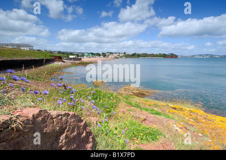 Wild flowers growing along the rocky shoreline at Goodrington South near Paignton in Devon with blue sky and white - Stock Photo