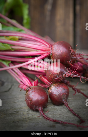 beetroot newly cropped in a bundle on a characterful wooden surface on an allotment in the UK - Stock Photo