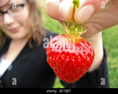 A young woman holds up a freshly-picked strawberry from an organic farm in Maine. - Stock Photo