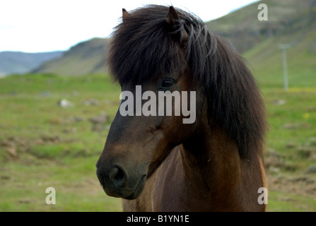 A horse in middle of nature watching the photographer. - Stock Photo