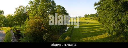 Evening sunlight falling on cattle grazing beside the River Coln near the Cotswold village of Quenington, Gloucestershire - Stock Photo