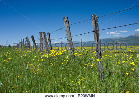 A rustic fence strung with barbed wire stretches into the distance through a field of wildflowers in central Idaho. - Stock Photo