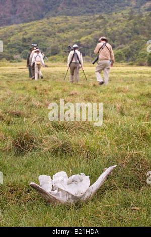Tourists on Guided walk pass a buffalo skull in Arusha National Park Tanzania - Stock Photo