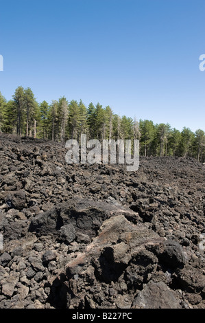 Pine forest and lava field on Mount Etna - Stock Photo