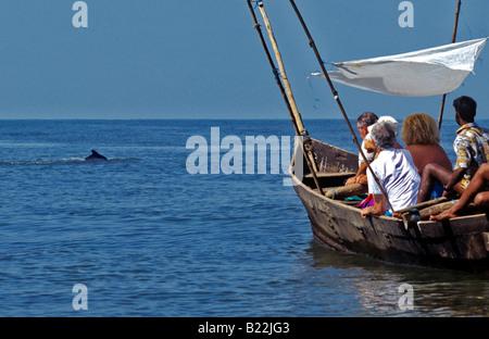 0969 Dolphin watching Goa State India - Stock Photo