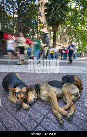 Three stray dogs sleeping on a city centre street in Santiago, Chile. - Stock Photo