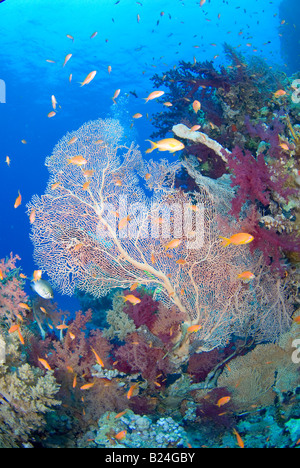 Coral reef  in Ras Mohammed national park, Egypt - Stock Photo