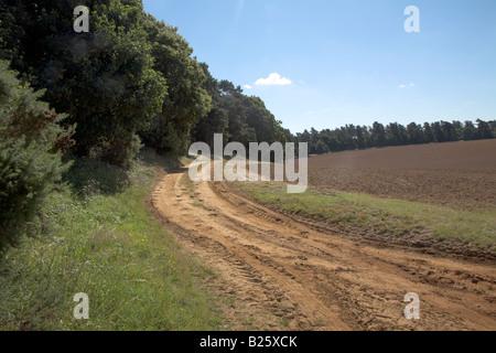 Sandy farm track and field near Sutton, Suffolk Sandlings, Suffolk, England - Stock Photo