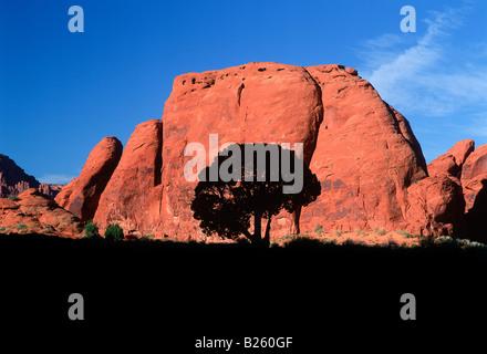 A shade tree in Monument Valley Arizona-Utah border. - Stock Photo