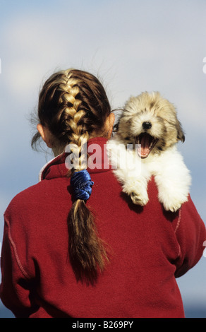 Coton de Tulear (Canis lupus familiaris). Girl with yawning puppy on her shoulder - Stock Photo