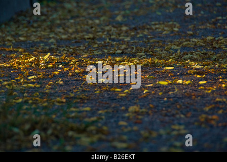 Withered autumn leaves on blue asphalt lit by rays of evening light - Stock Photo