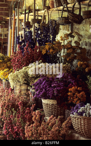 Roundhouse Surrey mixed dried flowers - Stock Photo